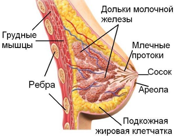 уход за грудью во время кормления