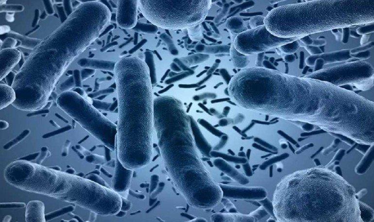 Как пребиотики помогают похудеть